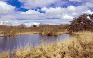 Golfreizen Natuurpark De Meinweg