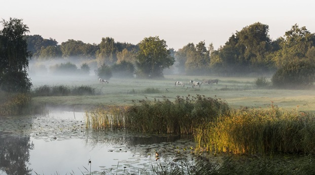 Golreizen Noord-Brabant